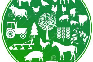 agriculture clipart 6