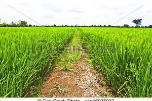 agriculture field clipart 3