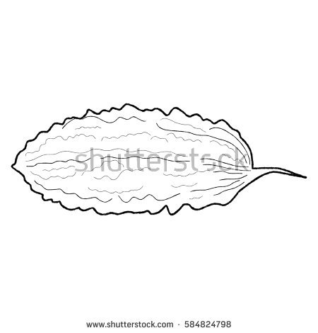 ampalaya coloring pages | Ampalaya clipart black and white 7 » Clipart Station