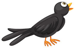 amsel clipart 7