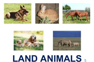 animals live in land clipart 5