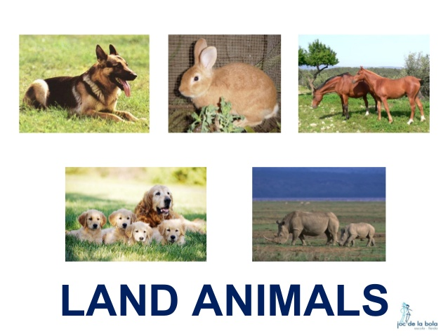 Animals live in land clipart 5 » Clipart Station
