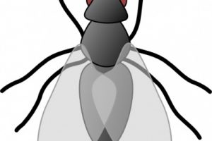 animals that fly clipart 1