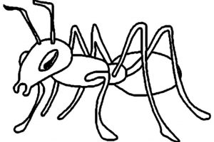 ant clipart black and white