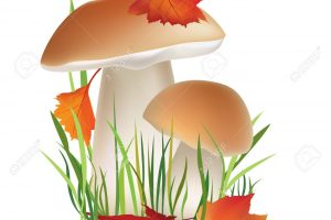 mushrooms-frame-1