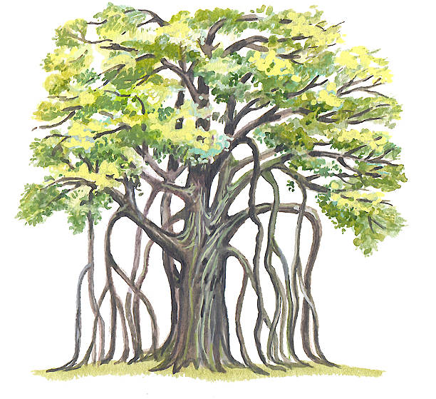 Banyan tree clipart 8 » Clipart Station