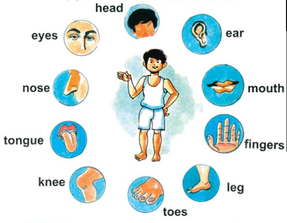 body-parts-for-kids-clipart-1.png