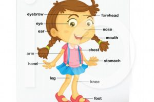 body parts for kids clipart body parts for kids clipart human body parts clipart clipart kid 400 X 420