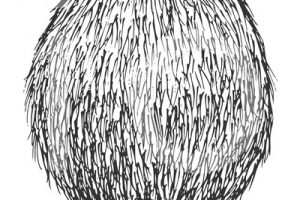coconut clipart black and white 4