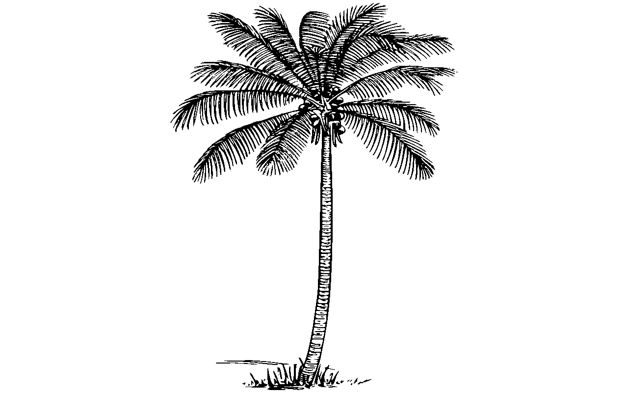 Coconut tree clipart black and white 2 » Clipart Station