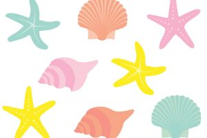colorful seashell clipart png