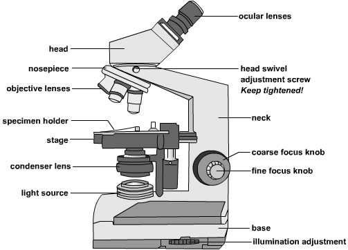 Compound microscope clipart 5 » Clipart Station