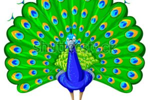 cute peacock clipart 9