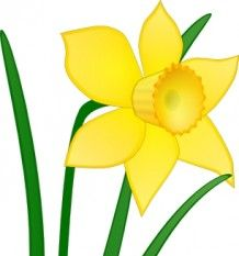 daffodil clipart 8 clipart station rh clipartstation com daffodil clip art black and white daffodil pictures clip art