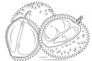 durian clipart black and white 2