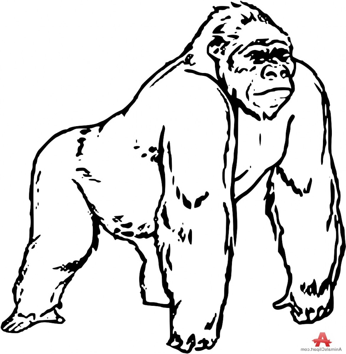 Gorilla Clipart Black And White 6 on Coloring Pictures Of Animals At The Zoo