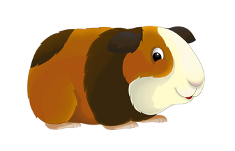 Image result for guinea pig clipart