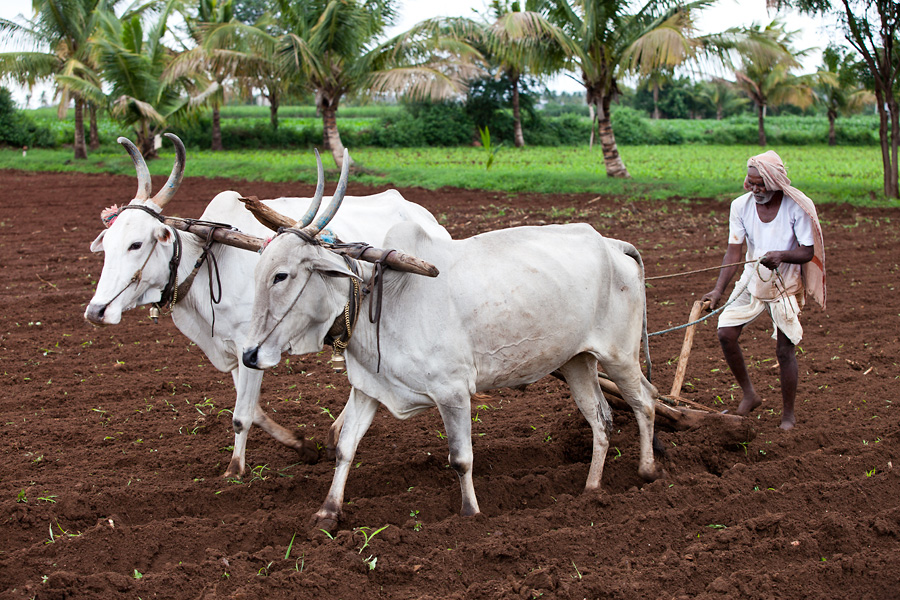 about farmers in india in hindi All india rural credit survey committee showed that in 1950-51 the share of money lenders stood at as high as 686 per cent of the total rural credit and in 1975-76 their share declined to 43 per cent of the credit needs of the farmers.
