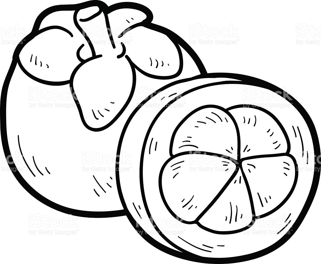 Mangosteen Drawing Pictures