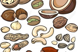 nuts clipart 2