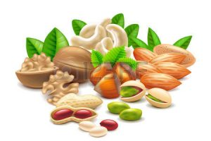 nuts clipart 4