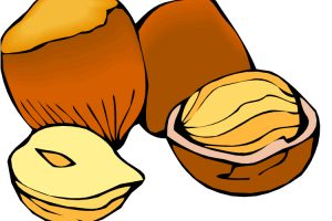 nuts clipart 8