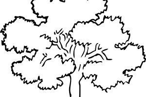 oak tree clipart 2