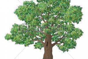 oak tree clipart 3