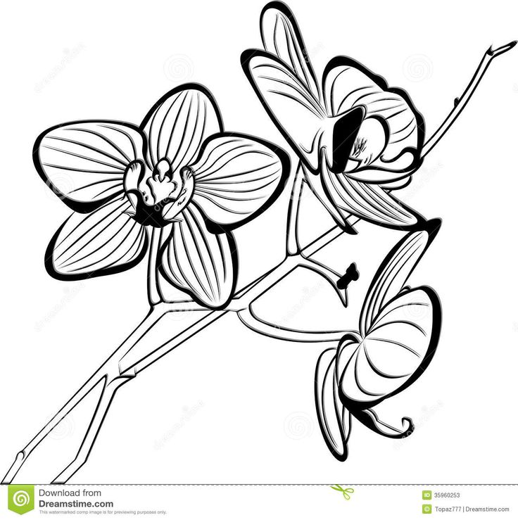 Orchid clipart black and white 6 » Clipart Station