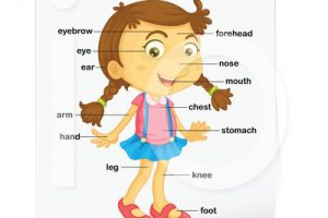 parts of the body for kids clipart 9