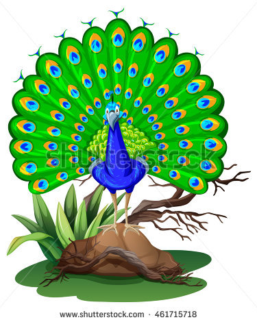 peacock clipart images 7 clipart station rh clipartstation com peacock clipart png peacock clip art images