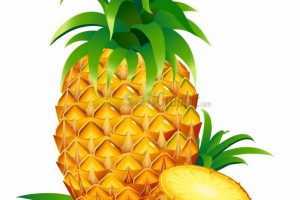 pineapple clipart 7