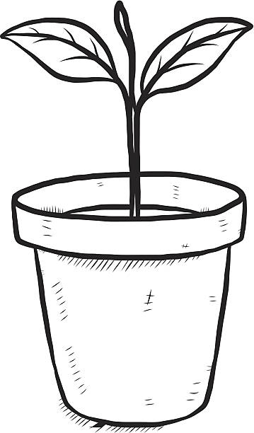 plant clipart black and white 3 187 clipart station