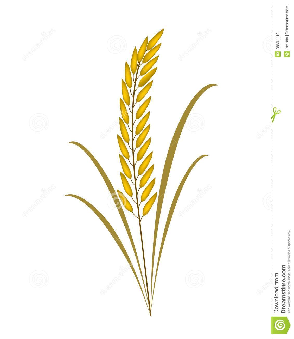 Rice Plant Clipart Black And White 8 Clipart Station