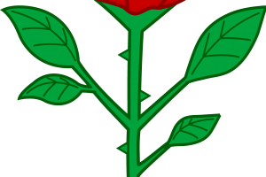 rose flower clipart 3