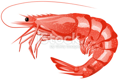 shrimp clipart 9 clipart station rh clipartstation com shrimp clipart black and white shrimp clipart png
