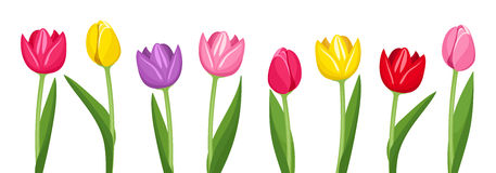 Tulpen clipart 10 » Clipart StationTulips Page Borders Clipart Free