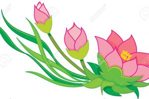 water lily clipart 4