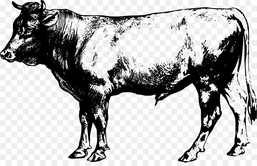 Cow beef. Clipart station