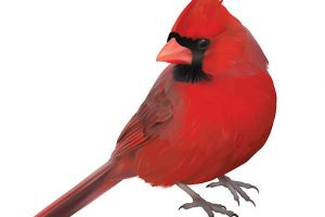 clipart of cardinal 2