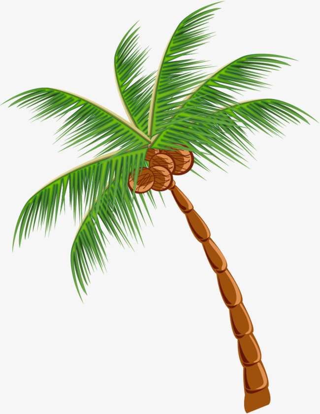 Coconut tree clipart png 1 » Clipart Station