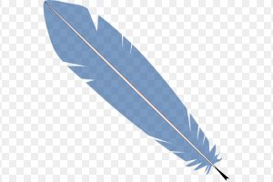 feather clipart png 1