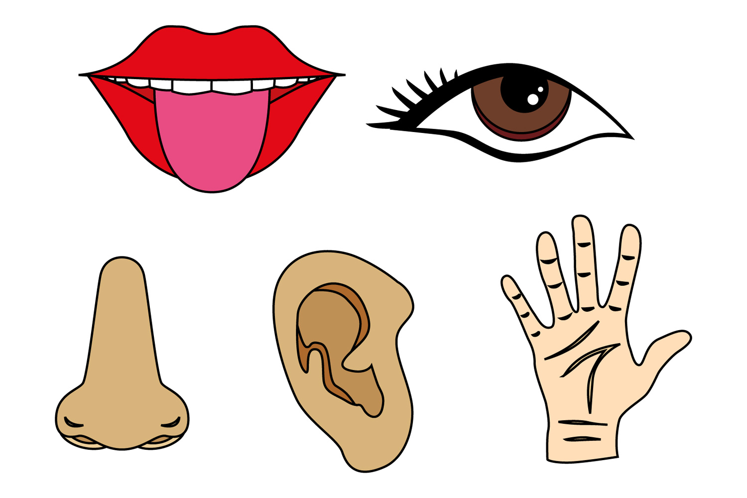 Five senses clipart see 5 » Clipart Station