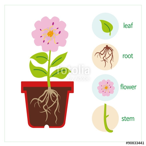 Flower Roots Clipart A Diagram Of A Plant A Flower ...