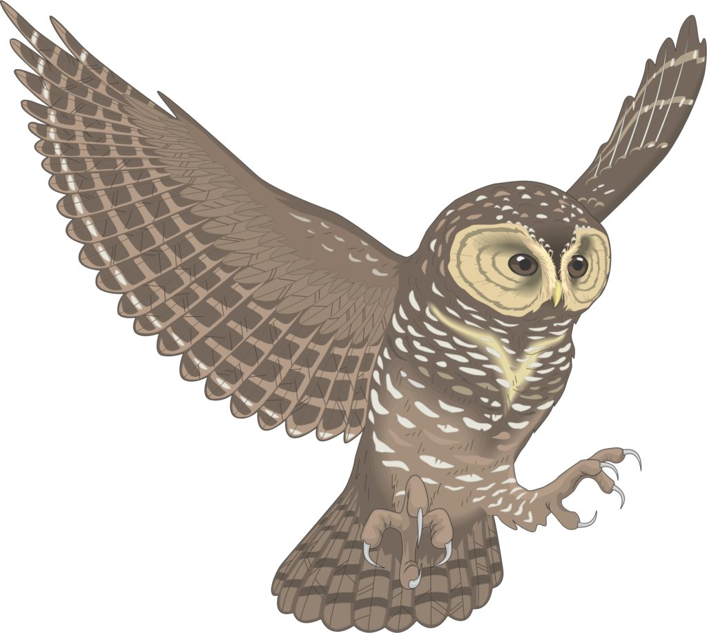 Owl flying. Clipart station