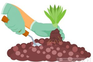 planting small plant in soil gardening clipart