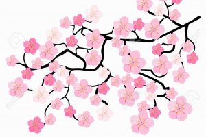 branches of Japanese cherry blossoms. vector illustration