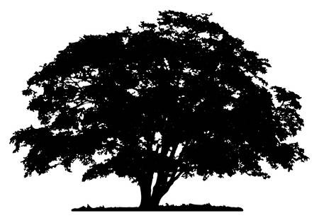 Oak Tree Clipart Black And White 1 Clipart Station