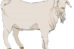 old goat clipart 1