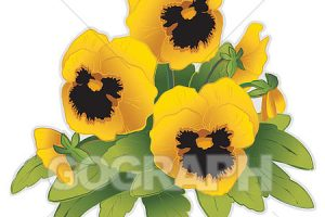 pansy clipart 4
